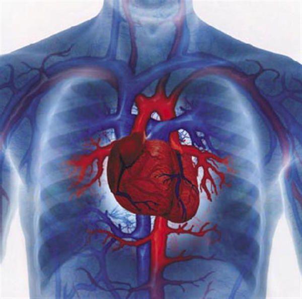 Як вилікувати серце будинку. Народні засоби і поради мпеціалістов
