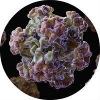 Лікування папіломавірусної інфекції (впл) у чоловіків і жінок препаратами